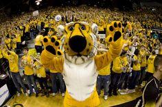 Mascot Monday: The University of Missouri Tigers | Surviving College