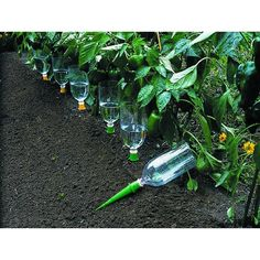 Self-watering bottles for garden…