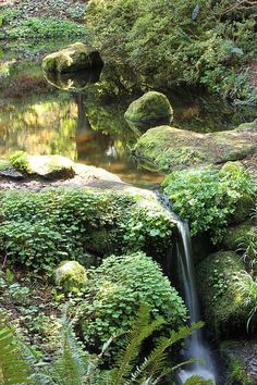 A small pond with a waterfall. Narrow our with mossy rocks and planting