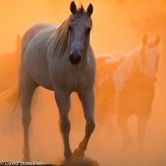Horse / photograph by David R. Stoeklein