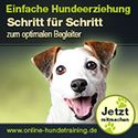 Hunde richtig erziehen: Top 10 Tipps | Everything about the dogs