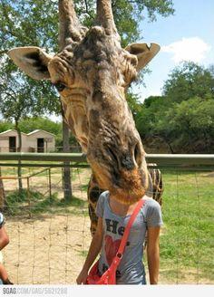 La girafe improbable | #Photobomb | #vacances |