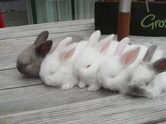 Some meat rabbits, I love their coloring!.