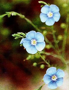 Pinner says-To exist in a garden of bluest flax and lily of the valley would be perfection.