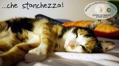 la vita stressante di una povera gattina http://graficscribbles.blogspot.it/2016/05/gatti-felni-amorefelino.html