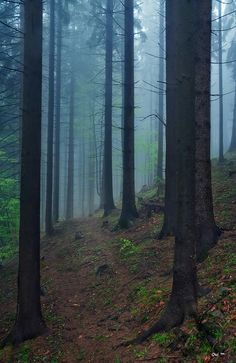 Romania , looks like Twilight or Lord of the Rings :) . I'd rather be attacked by a sexy vampire Places To Travel, Places To See, Europa Tour, Magical Forest, Misty Forest, Visit Romania, Jonathan Safran Foer, Dream Vacations, Beautiful Places