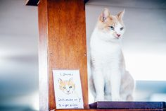Amsterdam. cat shelter on the barge 30