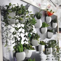 Cheap magnet pack, Buy Quality magnet tester directly from China magnet security Suppliers: DIY Artificial Silicone Succulent Plant Fridge Magnet For Home Hotel Party Decoration Bonsai 10 Types Fake Potted Plants, Green Plants, Indoor Plants, Hotel Party, Bonsai, Ceramic Flowers, Faux Flowers, Planting Succulents, Planting Flowers
