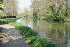 River Wey, Farnham