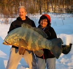 21 Best Alan Bennett Ceramic Fish Images Ceramic Fish