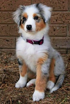 15 Cute Dog Pictures for Your Day - We love cute pictures of cats, dogs, horses, pigs, cows, lions, and tigers, and bears… OH MY!