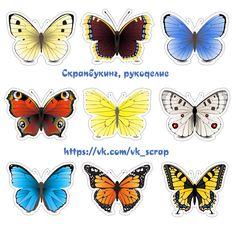 Высечки с бабочками