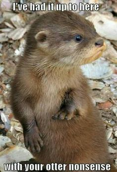 The word 'otter' makes some good puns