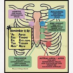 CNA School Training Programs For Certification – Nursing Degree Info Nursing Schools Near Me, Online Nursing Schools, Lpn Schools, Cna School, Nursing School Notes, Medical School, School Stuff, Nursing Assessment, Nursing Mnemonics