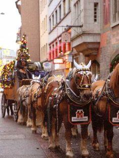 Christmas In Europe, Horses, Animals, Animales, Animaux, Animal, Animais, Horse