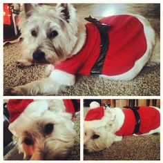 ♥ Shelby waiting for Santa!