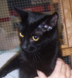 Sleek Black Cat With A Collar