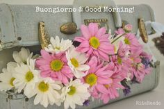 Mammabellarte : Good morning! Vintage suit case, aqua, daisy, white, pink, lavender