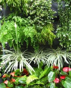 Hanging Gardens NZ, the home of green walls, vertical gardens, urgban regeneration and natural habitats » Hanging Gardens, Vertical Gardens,...