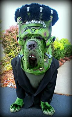 Our dog Halloween costumes, collars and accessories are the coolest. Our innovative dog costumes will make your pup the hit of the party. Please remember to read our Dog Halloween Safety Tips for a safe, fun Halloween. Pet Halloween Costumes, Animal Costumes, Pet Costumes, Boxer Halloween, Happy Halloween, Funny Dogs, Cute Dogs, Funny Animals, Cute Animals