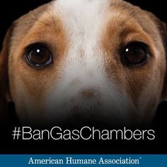 http://americanhumaneblog.org/join-aha-oppose-gas-chambers-for-euthanasia/