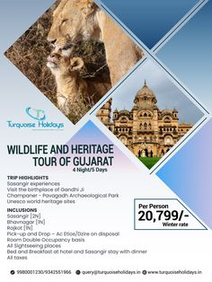 Breakaway and Explore Incredible India's unseen marvels Gujarat. Historical monuments to magnificent wildlife welcome you to Gujarat. Book your tour hassle-free with Turquoise Holidays. India Holidays, Holiday Packages, Historical Monuments, Incredible India, Business Travel, World Heritage Sites, Day Trip, Wildlife, The Incredibles