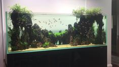 Nature Aquariums and Water Gardens  Watched this and drank 2 cuppa's on my occasional visit to check on this tank we built last year for a customer…all going well..  ☕️🌿🐟  Maintenance call outs are easy when you get the balance right.  Nature Aquariums & Watergardens AQUARIUM & POND SUPERSTORE 723 Whitehorse Rd Mont Albert 💻www.natureaquariums.com.au  📨 info@natureaquariums.com.au 📞03 9898 8432 OPEN EVERYDAY 10am – 6pm (excep