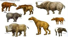 "Titanotheres (Brontotherium, Brontops, Dolichorhinus, Embolotherium, and Eotitanops), and Tapirs (Miotapirus and Heptodon); Note: Thunderbeasts probably refer to Brontotherium (which means ""thunder beast"") and Embolotherium"