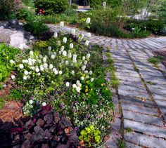Xeriscape Garden in Springfield, Missouri.