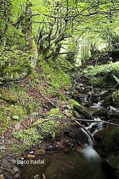 Parque de Redes: donde Asturias cambia del negro al verde >> Paco Nadal >> El Viajero >> Blogs EL PAÍS
