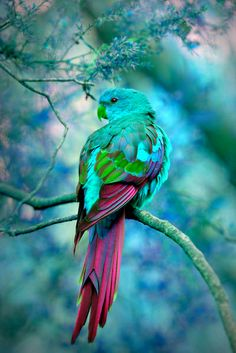 winged beauty filtered in turquoise