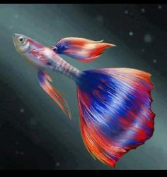 Such a beautiful fish...