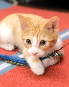 3 Purrfectly Easy To Make Cat Toys