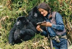 Dr Dian Fossey and two youngMountainGorillas.