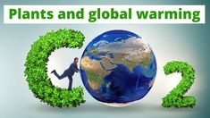 Can plants help against Global warming. Modern day scientist attribute global warming in part to elevated levels of carbon dioxide in the atmosphere. Save The Planet, Global Warming, Horticulture, Training, Plants, Garden Planning, Work Outs, Excercise, Plant