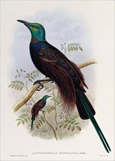 Birds of paradise 16