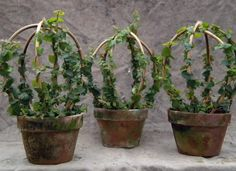 Topiary Topiaire avec un côté plus doux Gardenista - Hidden beneath my preference for natural-looking gardens, I have a weak spot for topiary. Relaxed topiary, that is. is that an oxymoron? Topiary Plants, Topiary Garden, Topiary Trees, Garden Pots, Vegetable Garden, Ficus Pumila, Container Plants, Container Gardening, Diy Plante