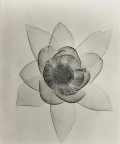 Dain L. Tasker  Lotus - An X-Ray  1935     it's beautiful!  Lotus was my late husband's name :-)