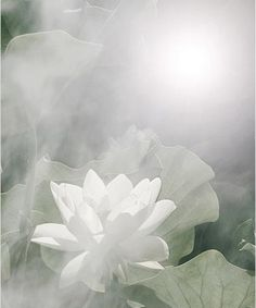White Light is Information, & is related to The Stars. It brings Consciousness, Clarity, Illumination & Wisdom. It is through White Light that we connect to the Earth Grid & other Star Systems. With purity of intention, white light also connects us to the Angelic & Higher Realms. Working with the White Light you can receive the answer to any question & feel how big you are in Truth.. ☪ Pull it in~ Expand it out~ Ask the Angels to Assist You~ Namaste'