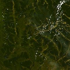 C26 Fractals, Plant Leaves, Plants, Image, Plant, Planets