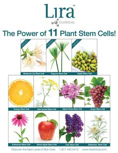 Discover the Power of 11 Plant Stem Cells for Beautiful Skin!  Lira Clinical is redefining aesthetics with innovative PSC technology.  We are giving away some of our favorite PSC products to three lucky winners! Like and share this post for a chance to win!  Stay tuned for Reveal Week 3! We will be debuting some exciting products to Boost your Beauty!