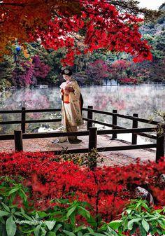Hiyogo Perfecture Japón me enamora #japon #geisha #hiyogo #pajaritos