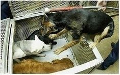 South Carolina: Ban Cruel, Archaic Gas Chambers to Kill Homeless Pets in Shelters