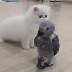【癒され動画】ヨウムの赤ちゃん可愛すぎる