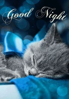 Send someone this good night and sweet dreams card. Free online Sweet Dreams And Sleep Well ecards on Everyday Cards Good Night Cat, Cute Good Night, Good Night Friends, Good Night Wishes, Good Night Sweet Dreams, Good Night Image, Good Night Greetings, Good Night Messages, Good Night Quotes