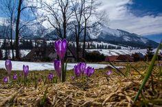212 Best Slovensko images  e428279056a