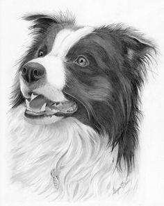 Western art and wildlife art. Perros Border Collie, Border Collie Art, Art Sketches, Art Drawings, Realistic Animal Drawings, Inspiration Drawing, Graphite Art, Matou, Dibujos Cute