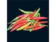 Thai Burapa Pepper | Baker Creek Heirloom Seed Co