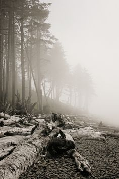 Olympic Peninsula Fog