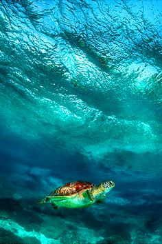~~Under a wave ~ turtle, Apo island, Philippines by Andrey Narchuk~~ Under The Sea, Philippines, Underwater, Seaside, Turtles, Waves, Tortoises, Under The Water, Beach
